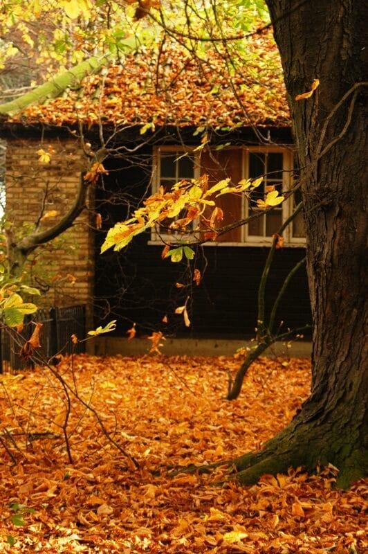 autumn5-5289776